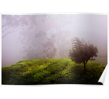 Ghost Tree in the Haunted Forest. Nuwara Eliya. Sri Lanka Poster