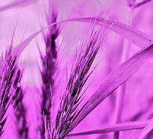 Lavender Wild Grass by aprilann