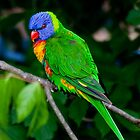 Technicolour Lorikeet by Margot Kiesskalt