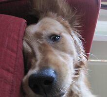 dog yoga VIII by uncleblack