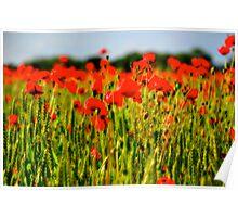 Poppy Field, Stibbard, Norfolk Poster