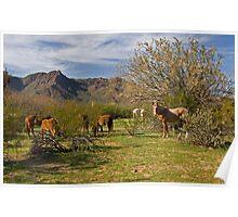 Desert Horses Poster