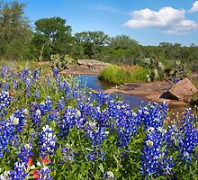 Bluebonnets in the Texas Hill Country 3 by RobGreebonPhoto