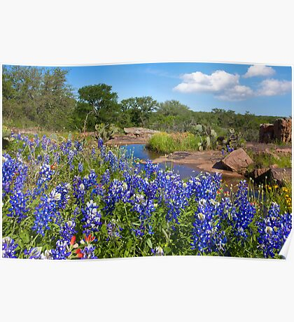 Bluebonnets in the Texas Hill Country 3 Poster