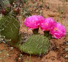 cactus in bloom by Anthony & Nancy  Leake