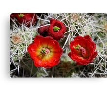red cactus flower Canvas Print