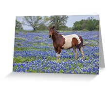 Horse in Texas Bluebonnets Greeting Card