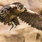 take off by RichardBlanton
