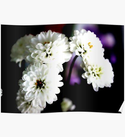 White flowers for valentines Poster