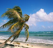 Palm Tree on the coast Riviera Maya by Roupen  Baker