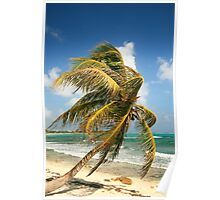 Wind Swept Palm and Caribbean Sea Poster