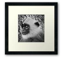 """Close-up """"black-faced"""" Hanuman langurs Framed Print"""