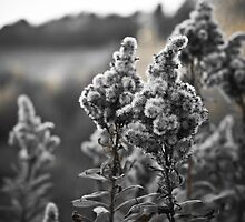 Winter Whisps by Jordan Shaw
