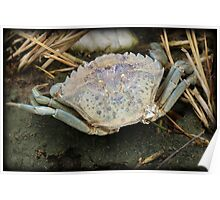 Colorful Crab Poster