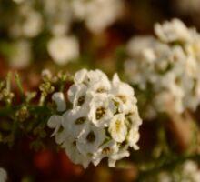 White Flowers Sticker