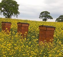 Beehives by thepicturedrome
