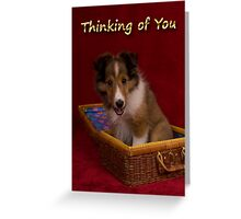 Thinking Of You Sheltie Puppy Greeting Card