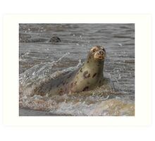 Atlantic Grey Seal Art Print