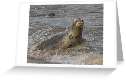 Atlantic Grey Seal by Patricia Jacobs CPAGB LRPS BPE2