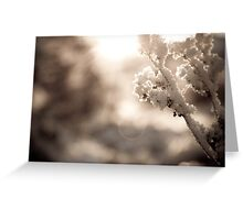 White Snow Greeting Card