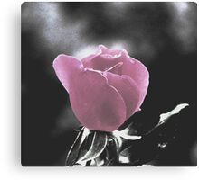 December Rose Canvas Print