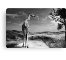 Beyond the Horizon Canvas Print