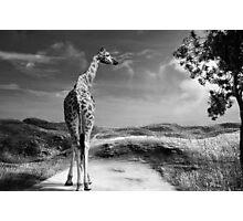 Beyond the Horizon Photographic Print
