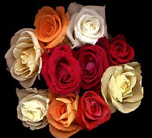 Roses by jacquimartin