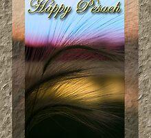 Pesach Grass Sunset by jkartlife