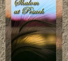 Shalom At Pesach Grass Sunset by jkartlife