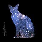 iPad case - Star Cat Gremlin by Odille Esmonde-Morgan