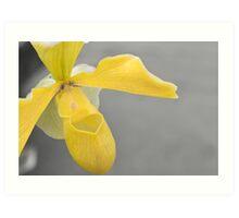 Yellow Slipper Art Print