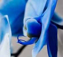 Winter Blues by Lynn Wiles
