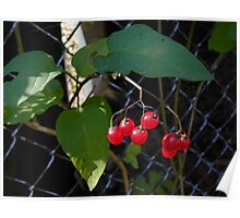 Berries against a Fence Poster