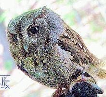 Eastern Screech Owl Resting by jkgiarratano