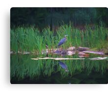 Blue Heron Reflections Canvas Print