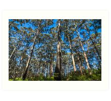 Trees; Beautiful Trees Art Print