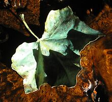 Shadow Leaf on Table by TCbyT
