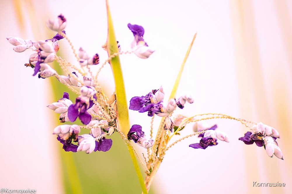 Happiness is...appreciate grasses that protect the soil and bloom tiny flowers to the earth... by Kornrawiee