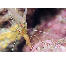 Glass fish queuing for cleaner shrimp service Photographic Print