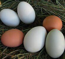 Co-op's Eggs by J. Casey Kemp