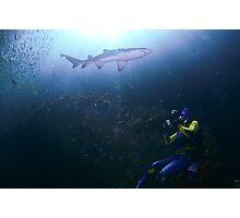 Grey nurse shark with scuba diver Photographic Print