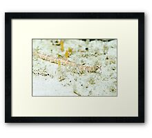 Pipefish Framed Print