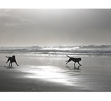 Shore Dogs Photographic Print