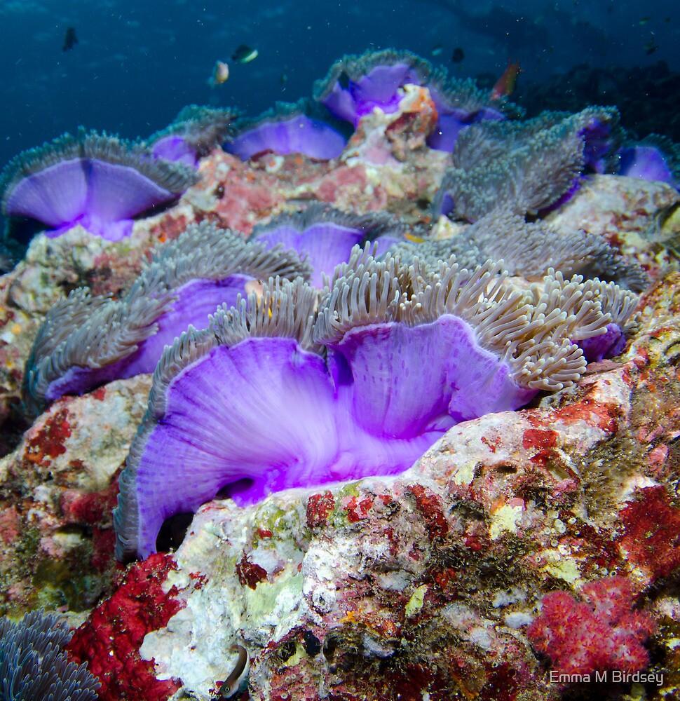 Purple anemones by Emma M Birdsey
