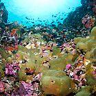Coral reef Thailand by Emma M Birdsey