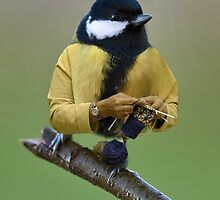 A Great Tit knitting a mitten by Felfriast