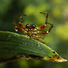 Surrendering Spider by George Crawford