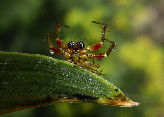 Surrendering Spider by George Crawford