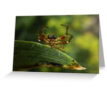 Surrendering Spider Greeting Card